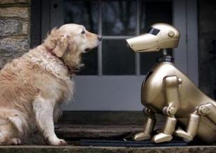 库克说iPhone将重点发展人工智能