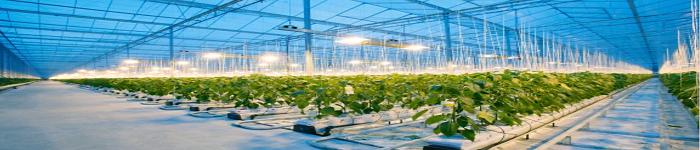 人工智能种植黄瓜