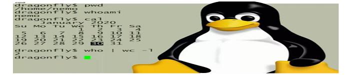 Linux用户和组管理常用命令