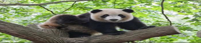 如何查询你的Pandas数据帧?